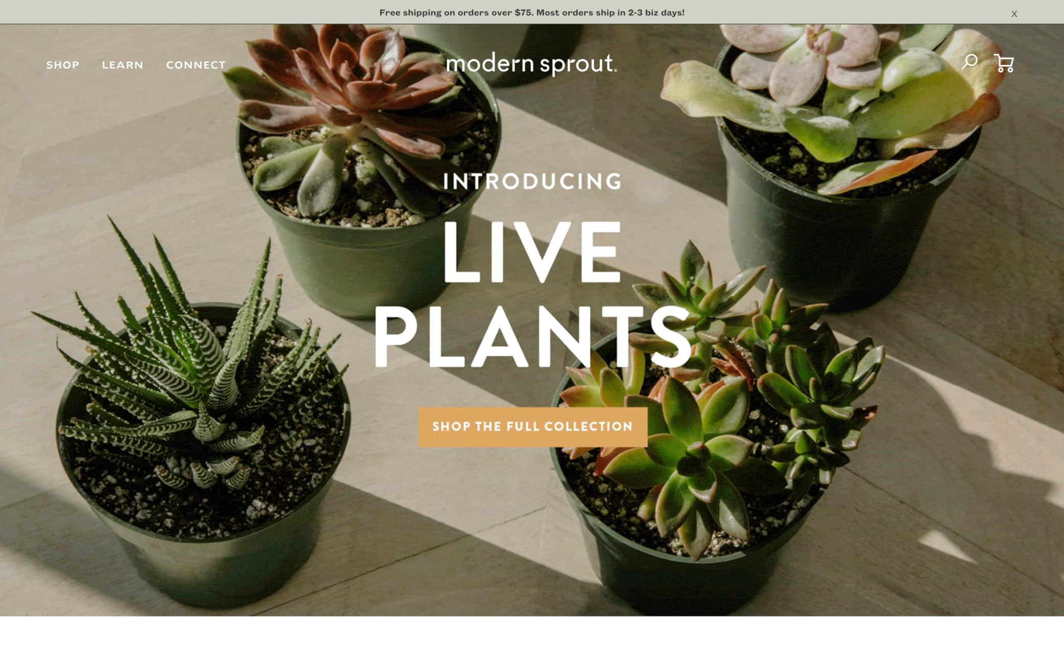 Modern Sprout Screenshot Main