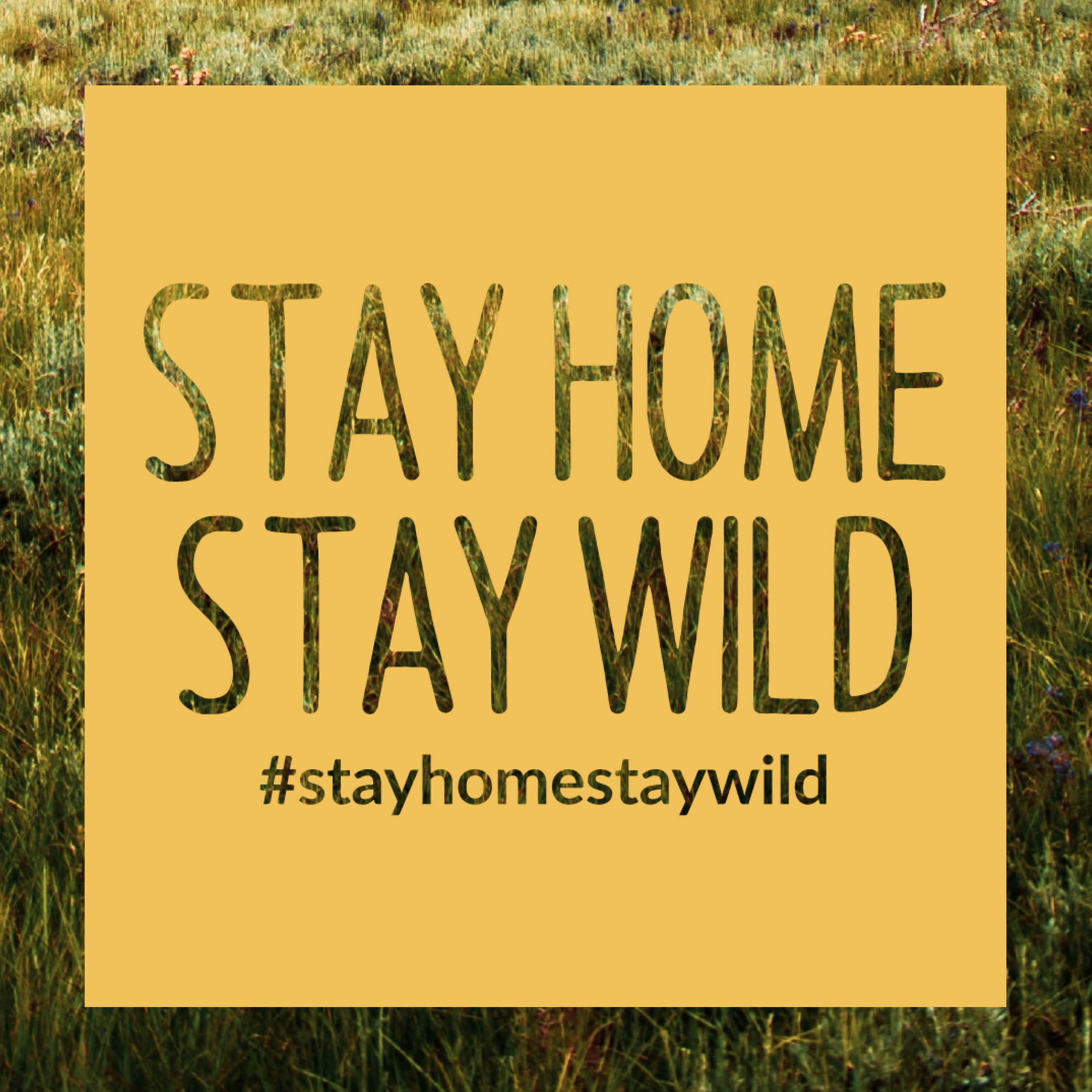 Stay Home Stay Wild: Outdoor Education Resources