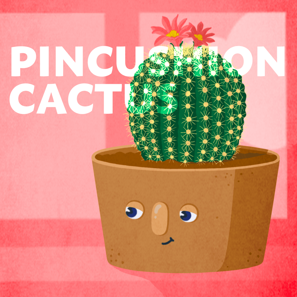 Pincushion cactus office plant