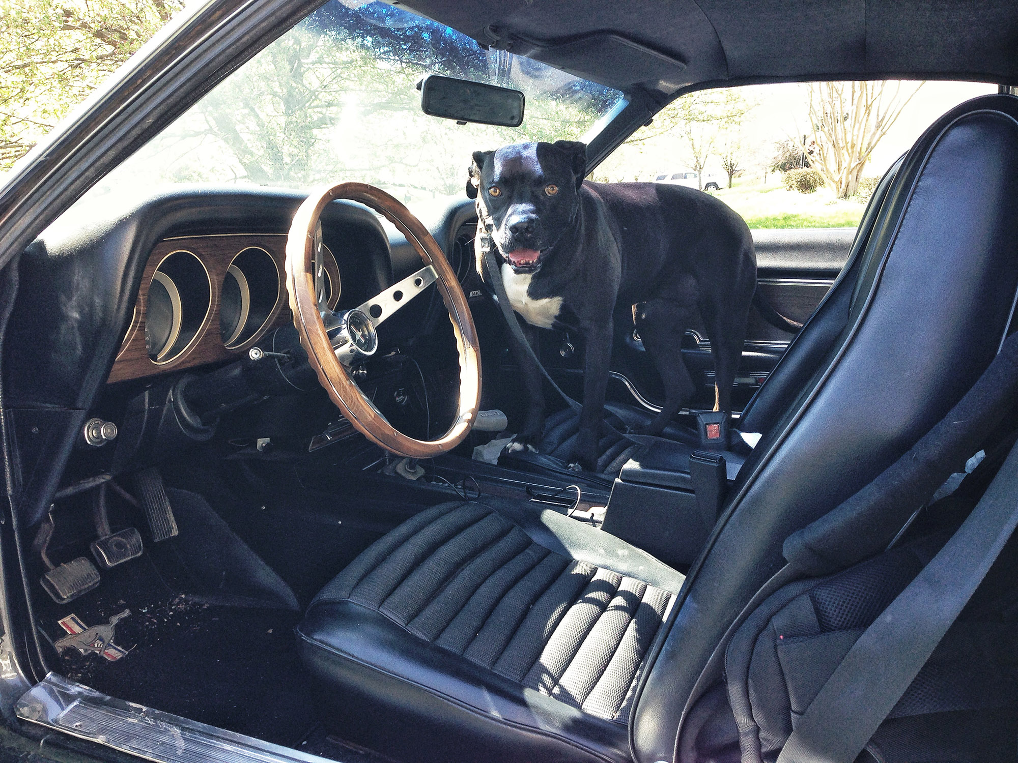 interior with dog