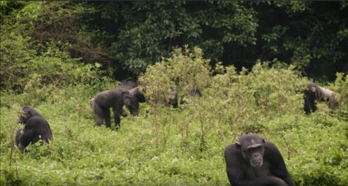 Uganda's New Forests