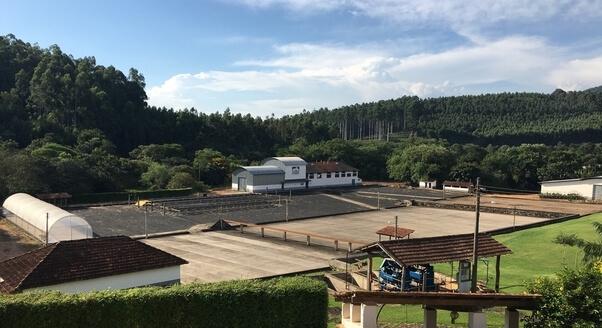 Brazilian coffee farm that supplies L'Ouverture Coffee