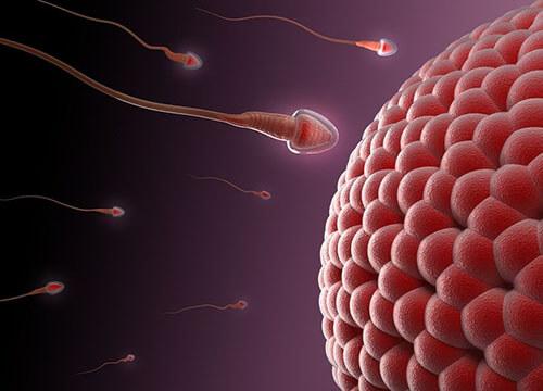Cần bao nhiêu tình trùng để có thai