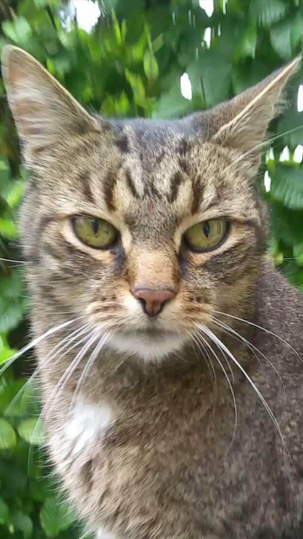 Eine wirklich schöne Katze