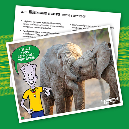 Elephant Fact Cards Primary Set 1