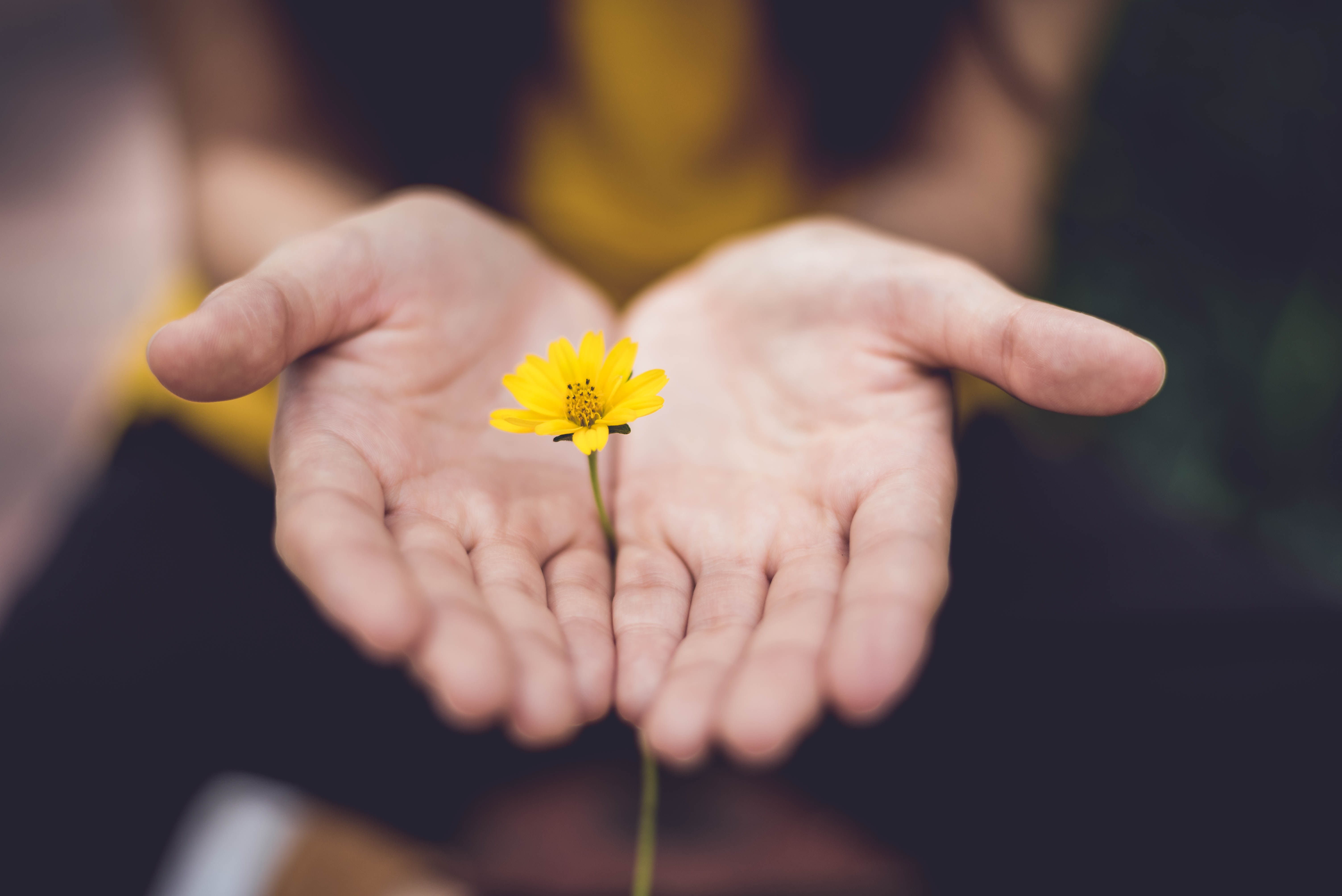 flower in hand values