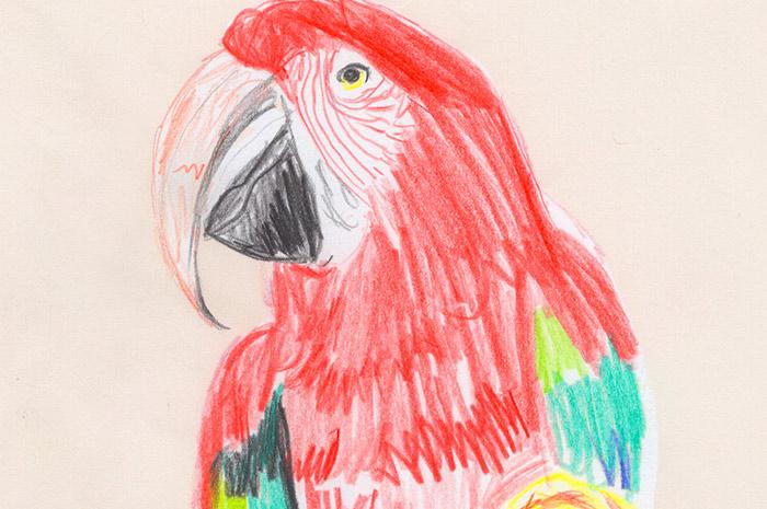 Tiere Zeichnen für Kinder ab 8
