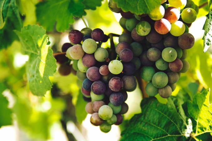 Vigne pour cuvée personnalisée sur-mesure unique