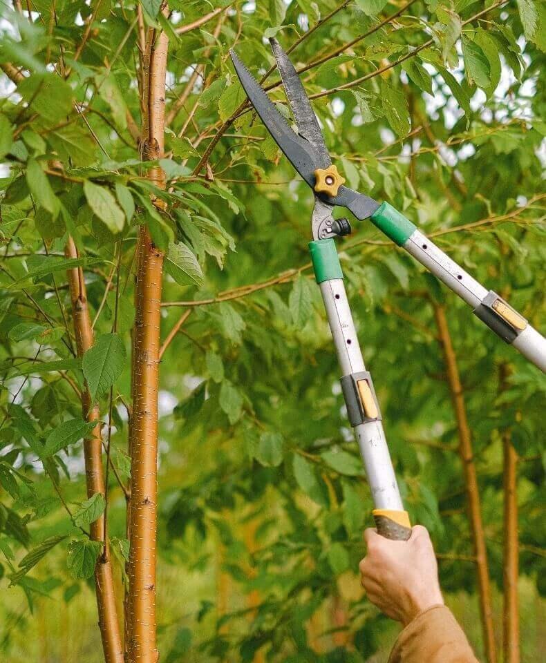 Beskärning av träd och buskar via Done.