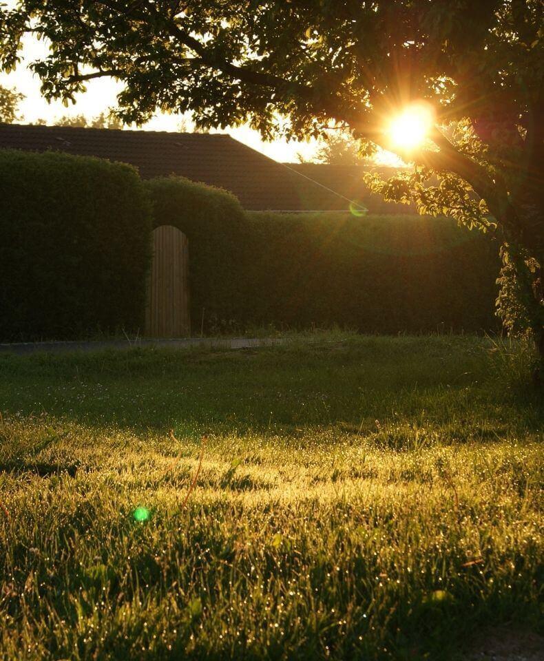 Fälla träd som skymmer solen med Done.