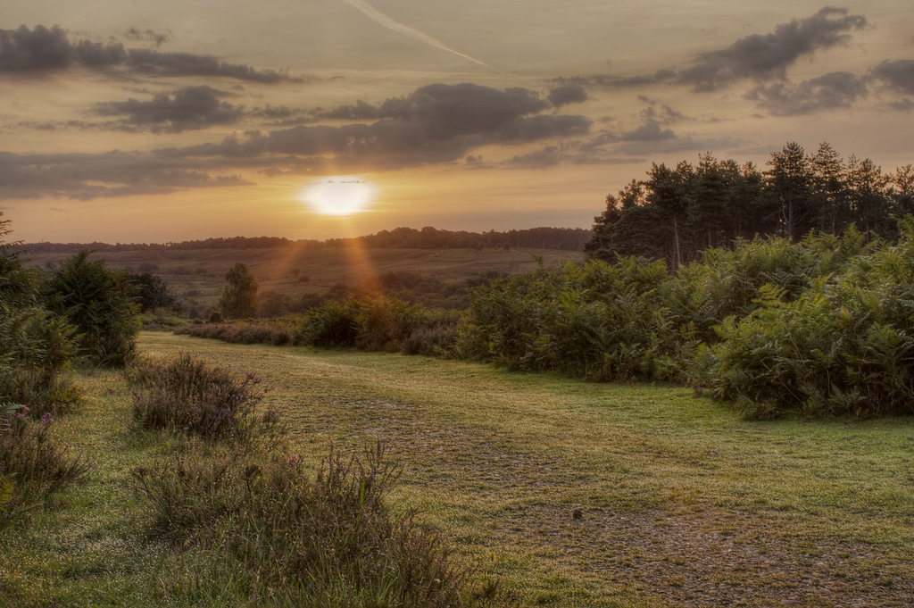 Rent a Land Rover to drive to the New Forest