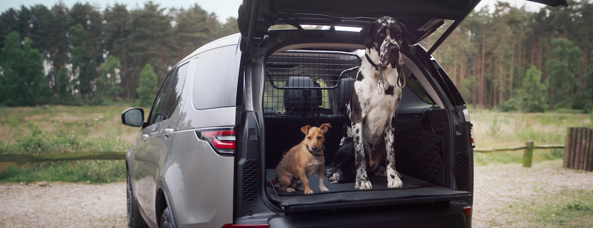 Land Rover Discovery Sport with dogs