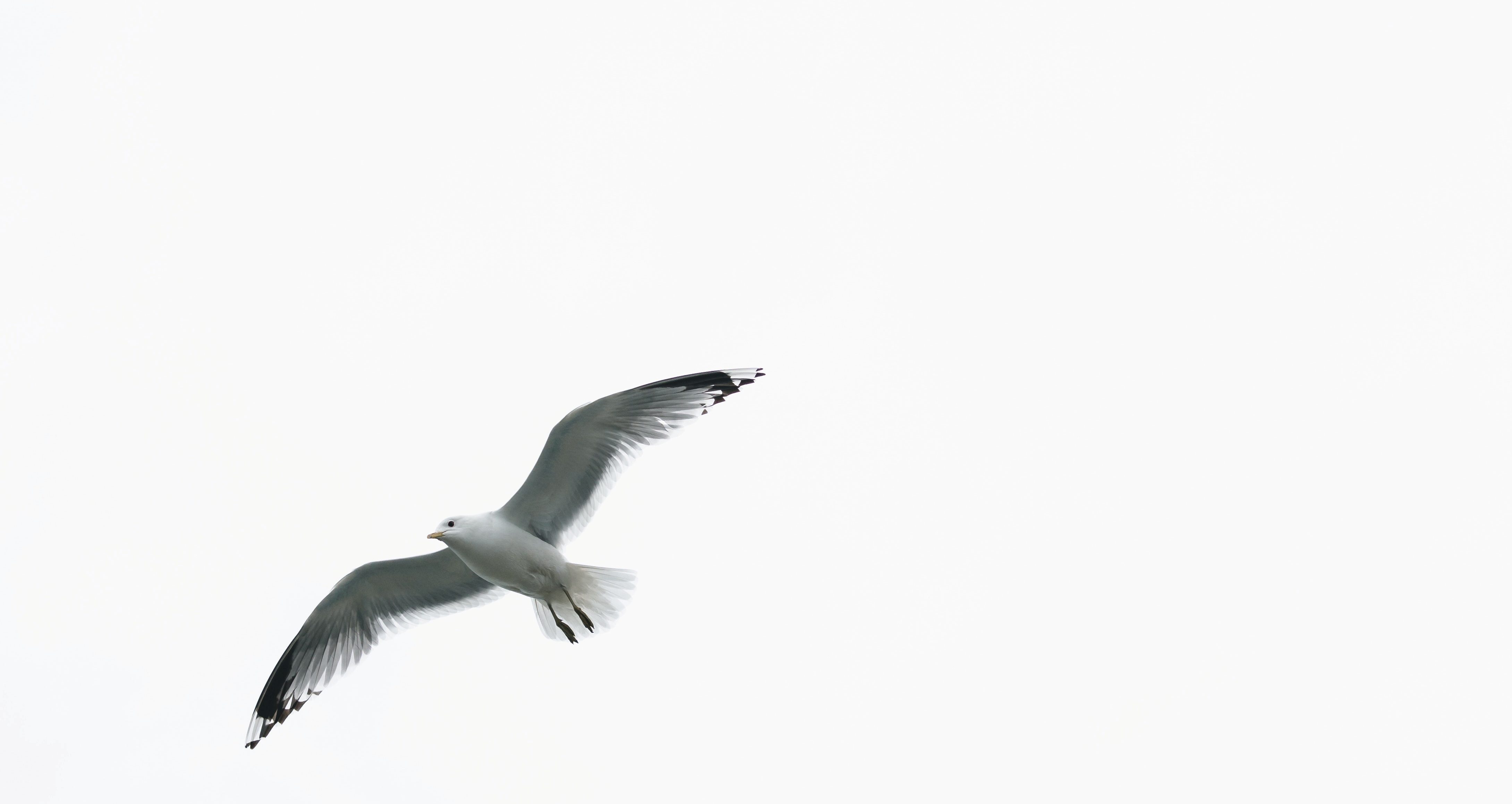 Bird flying in open sky