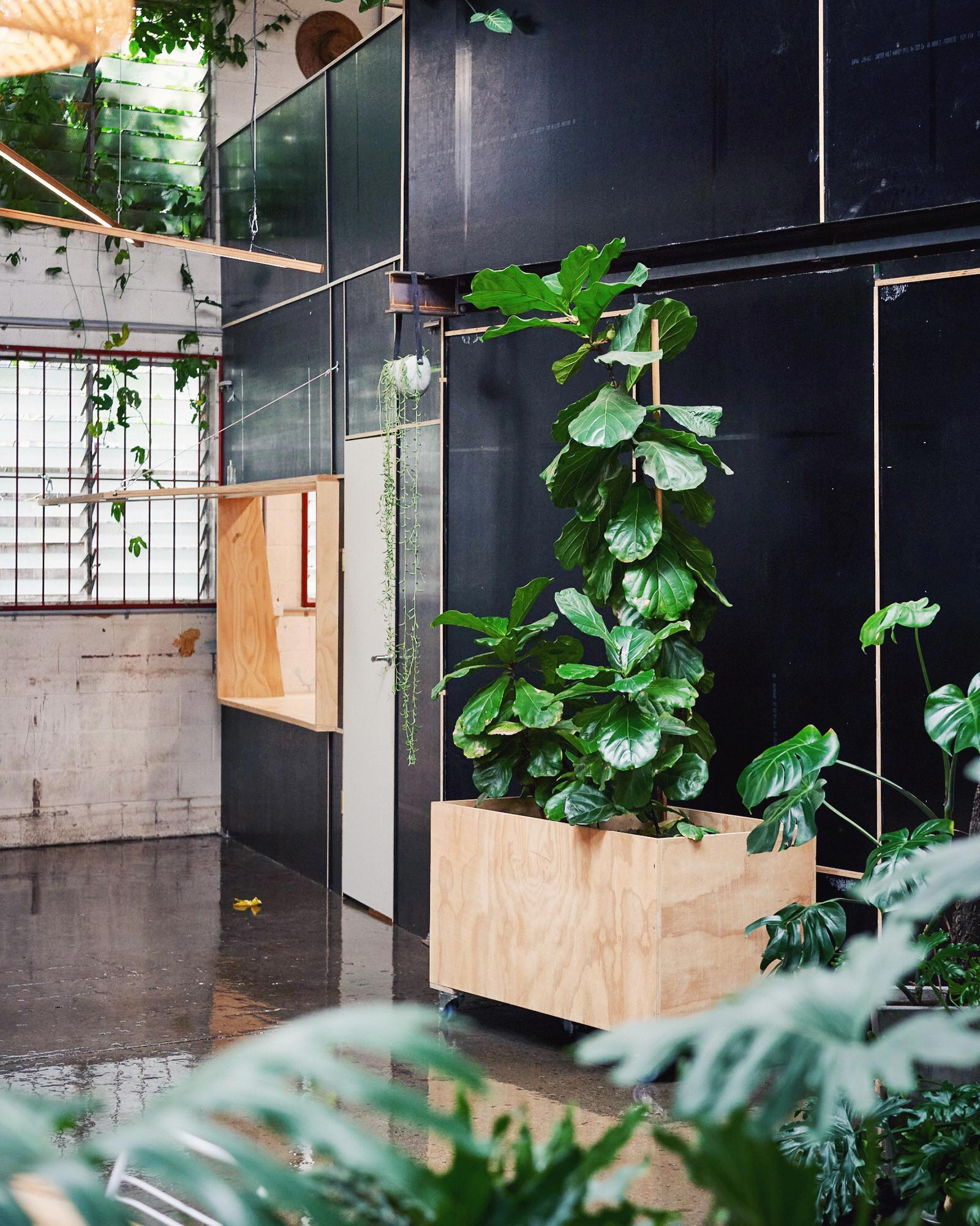 Picture of private office and plants at Colab 4010
