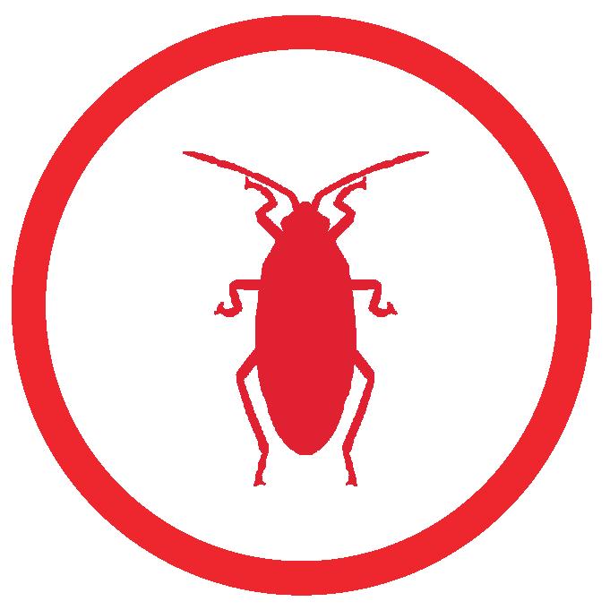 palmetto bug treatment Sarasota Fl.