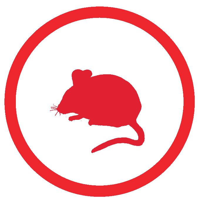 rat and rodent control sarasota fl