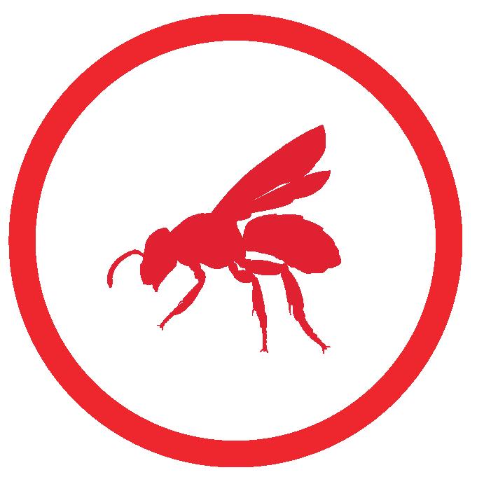 Wasp treatment Sarasota Fl.