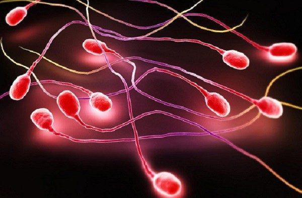 Tinh trùng màu đỏ là bệnh gì? Cách chữa trị