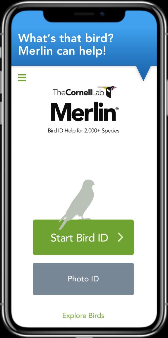 Merlin App