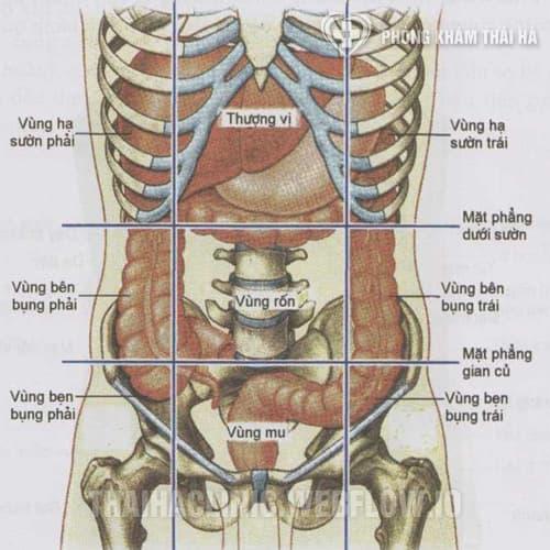 Các vị trí đau bụng dưới ở phụ nữ