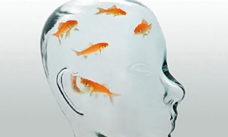 Cách chữa bệnh não cá vàng