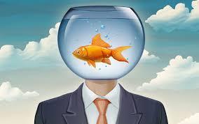 Bệnh não cá vàng nghĩa là gì? Tại sao gọi là não cá vàng cách chữa hiệu quả