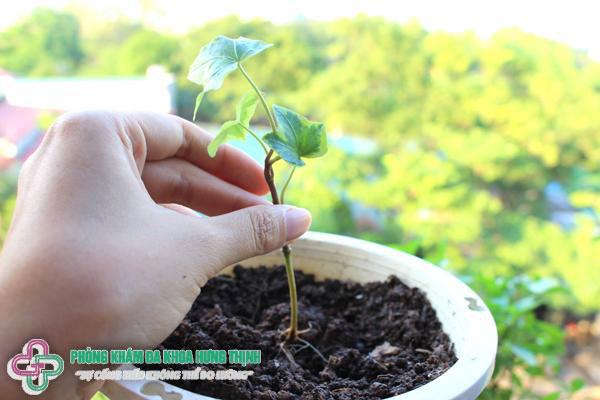Tại sao có bầu không được trồng cây