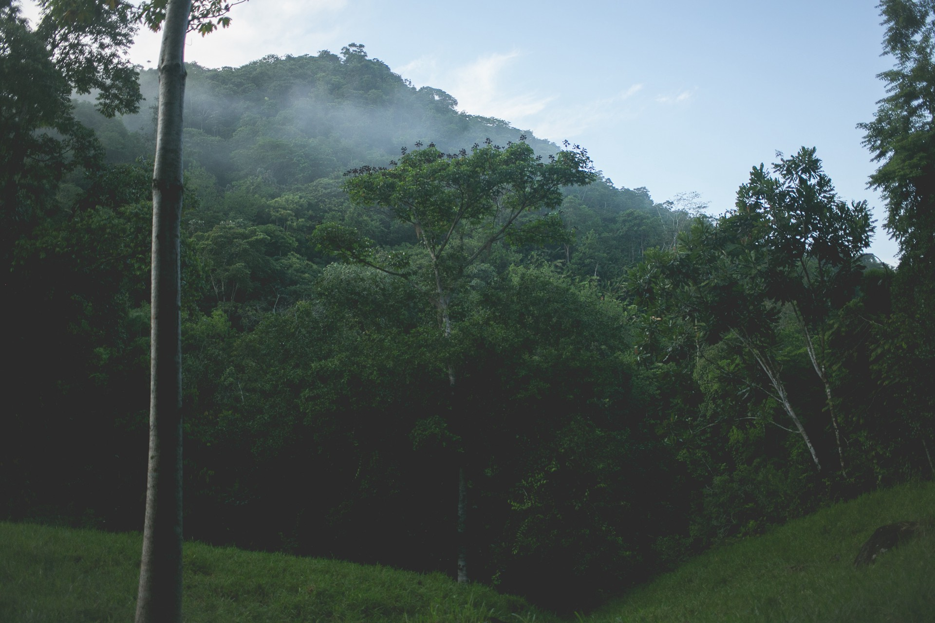 Fog in the jungles of Antioquia