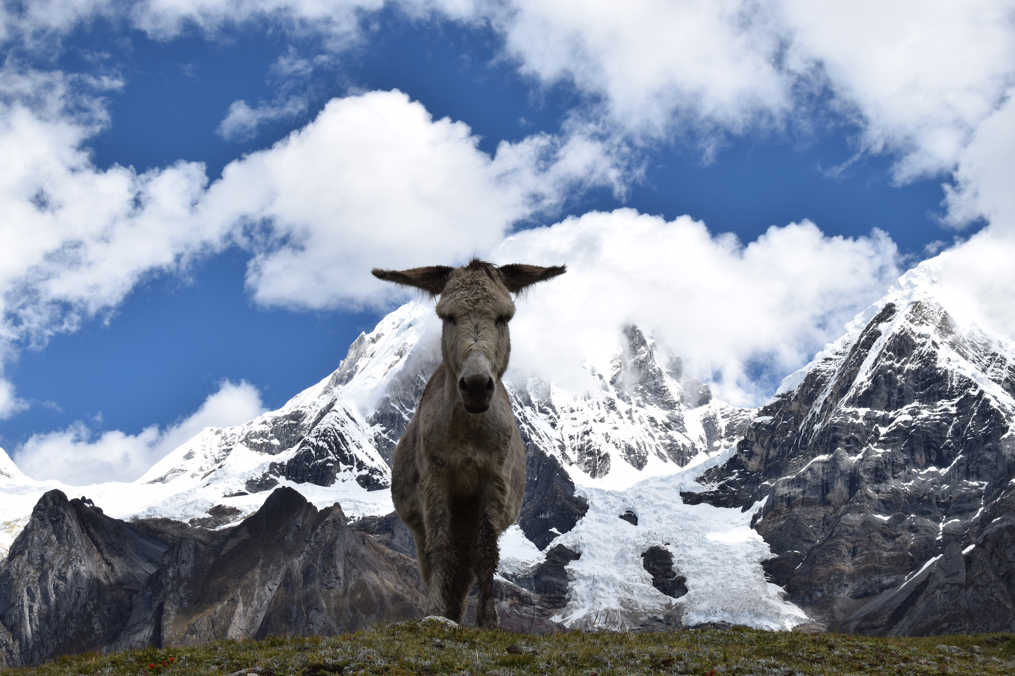 Donkey in front of snow capped mountains
