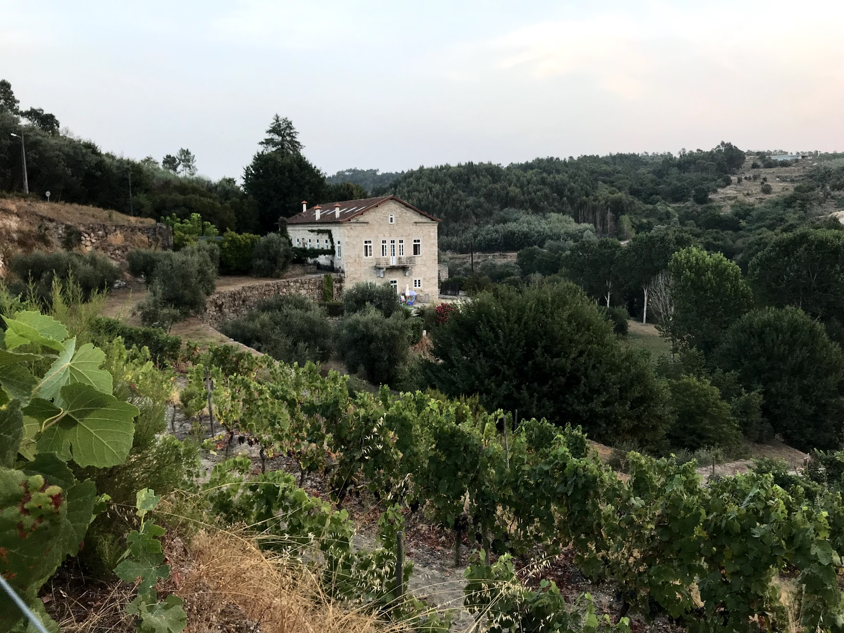 View from the vineyard to the house