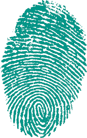 Green fingerprint on a white background