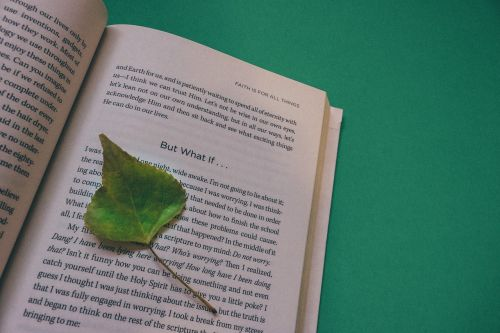 A small leaf on top of a book
