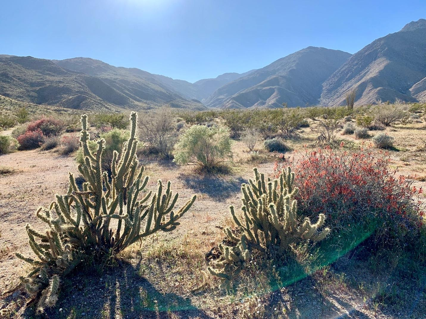The Anza-Borrego desert landscape with cactuses.