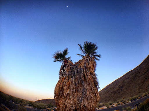 The Anza-Borrego sunset with palm trees