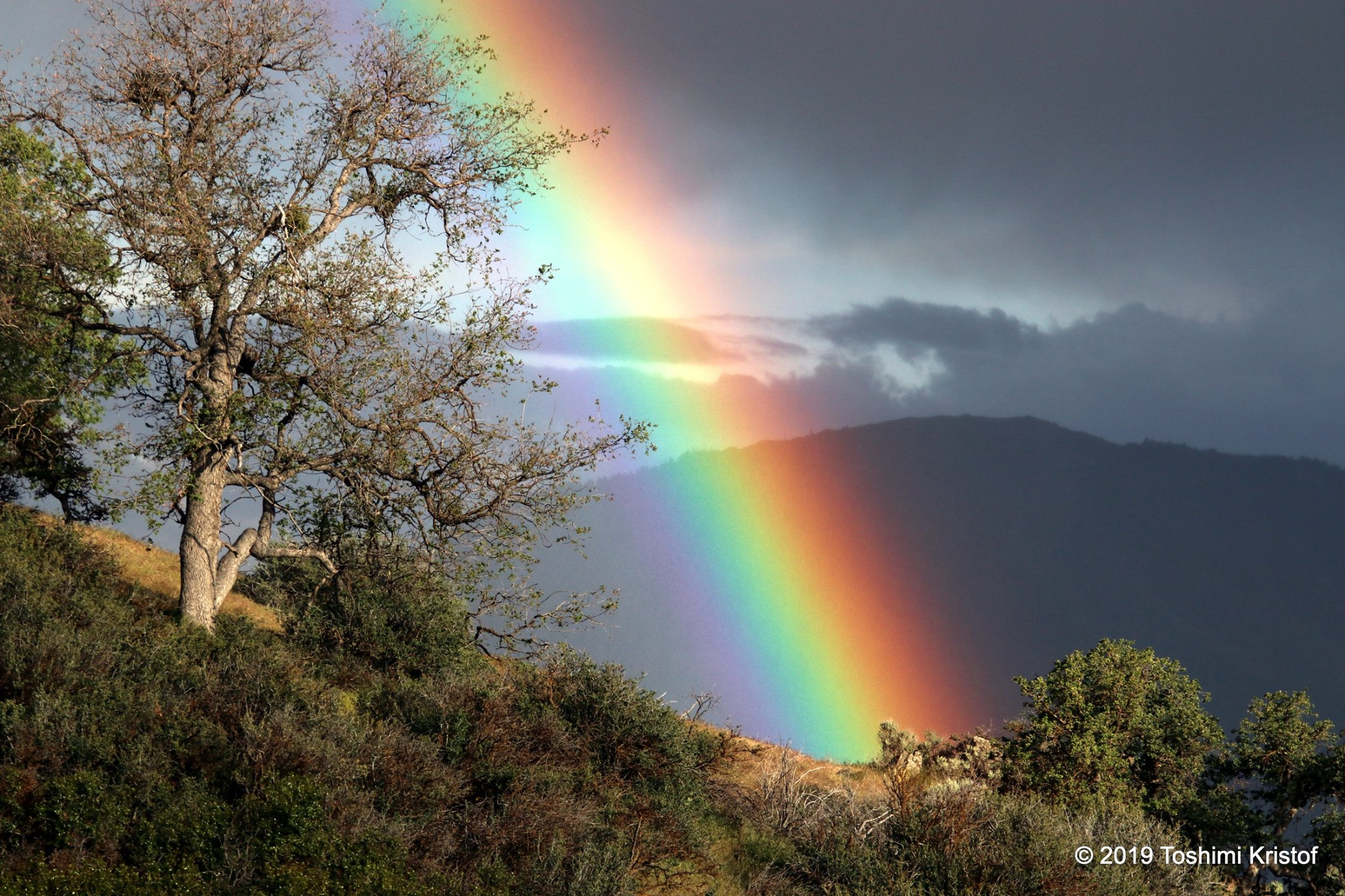 The setting sun lights an oak tree as a brilliant rainbow shines against the darkness of hills in the background