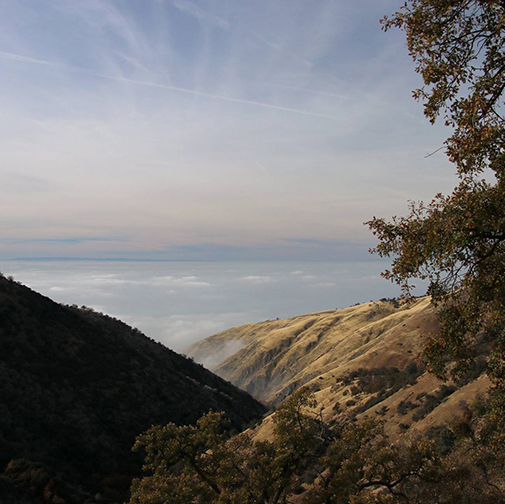 A view overlooking Sycamore canyon as the sun sets, with a pine tree in the foreground and clouds below the hilltop