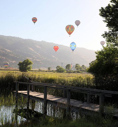 Six hot air balloons float up over a small shaded pond, with a wooden dock and a tall tree in the foreground