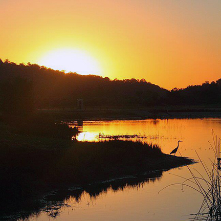 The setting sun shines golden over a small pond, with a heron silhouetted against the glassy reflection and tall dark grasses in the foreground.