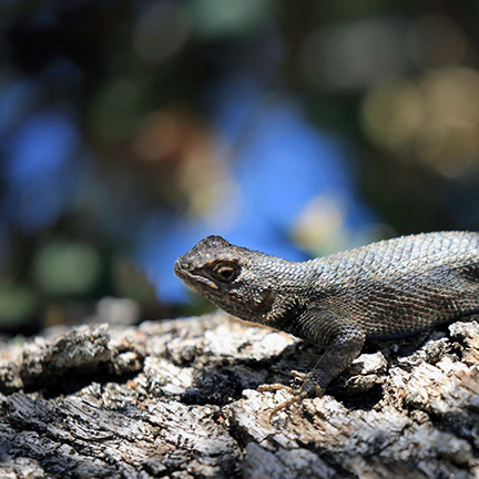 A small lizard sunbathes in the dappled sun on a tree branch
