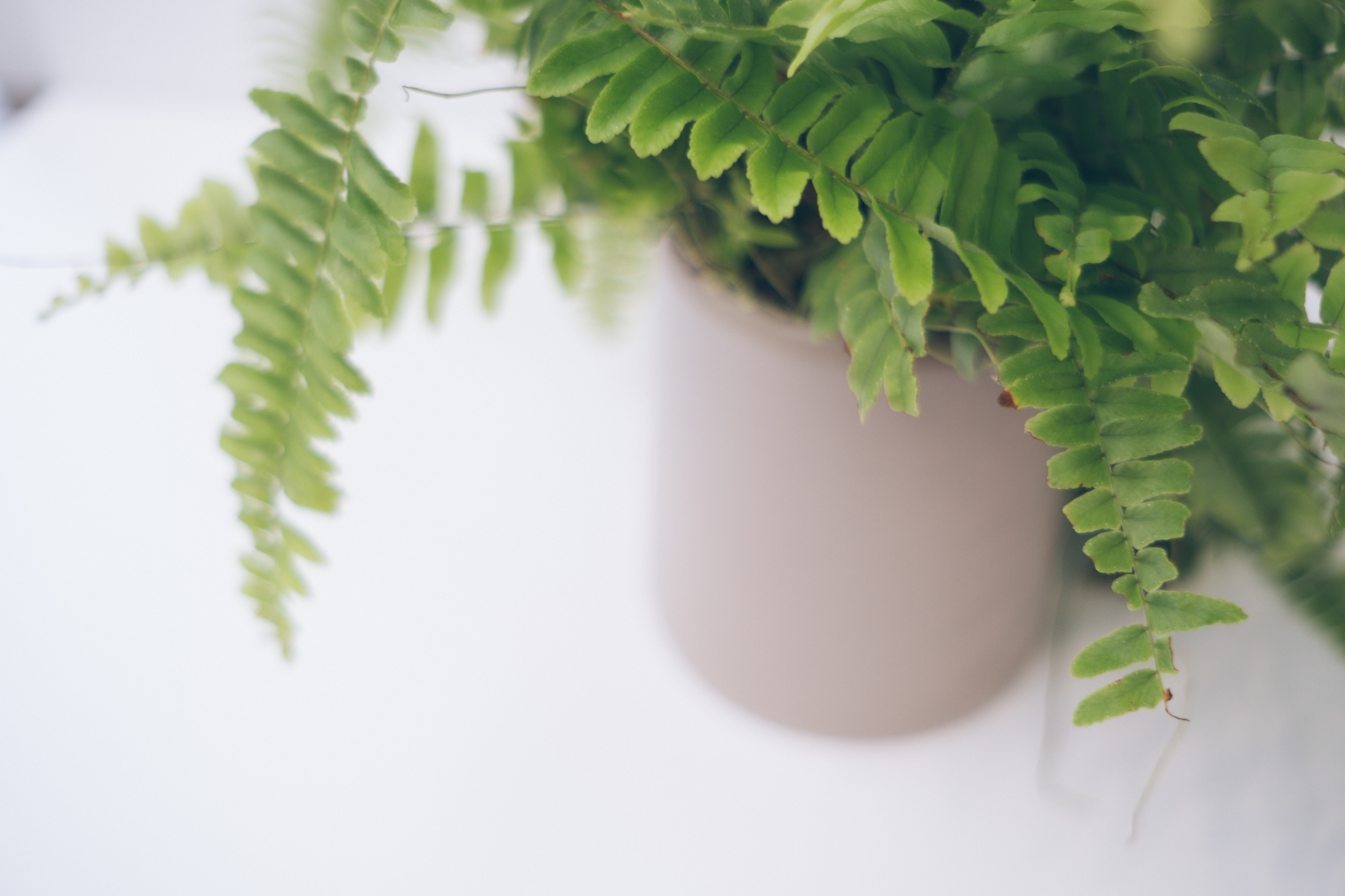 Close up shot of the nebl vase with a fern plant inside.