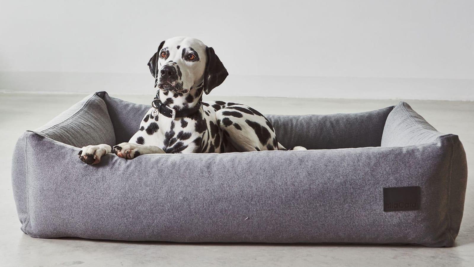 Divo Box Dog Bed
