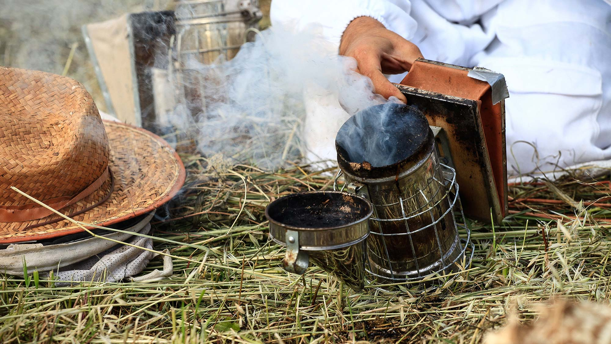 Beekeeper preparing smoker