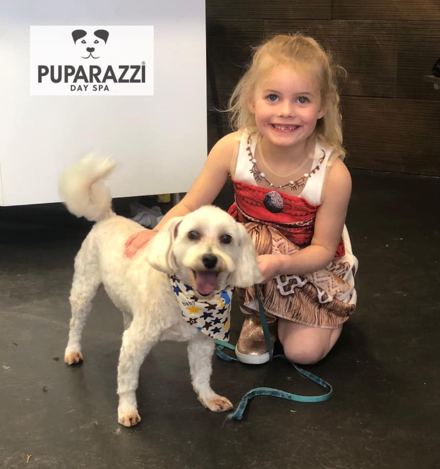 Ollie wheaton the maltese visiting Puparazzi Day Spa