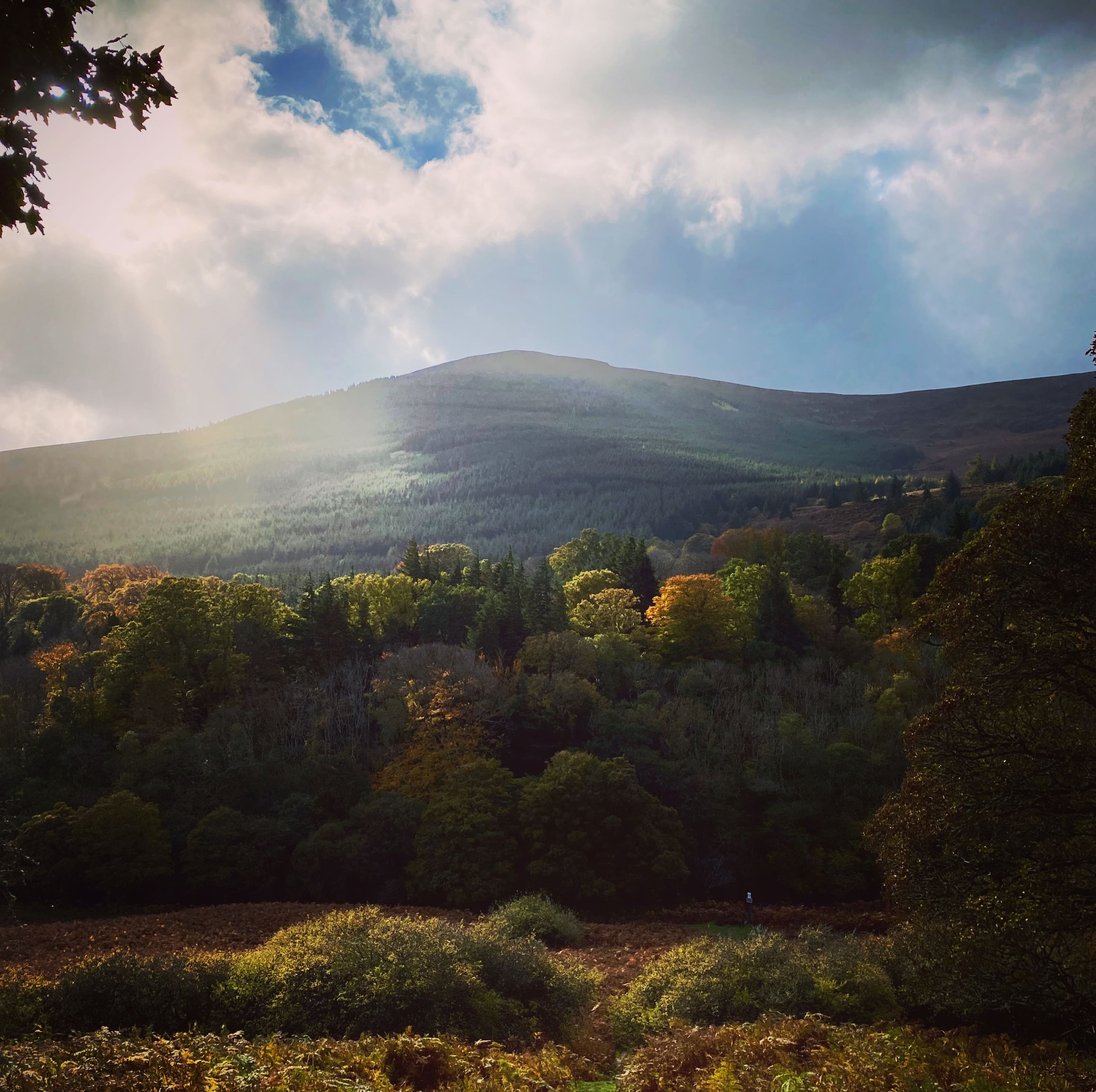 Forests in Glencree Valley