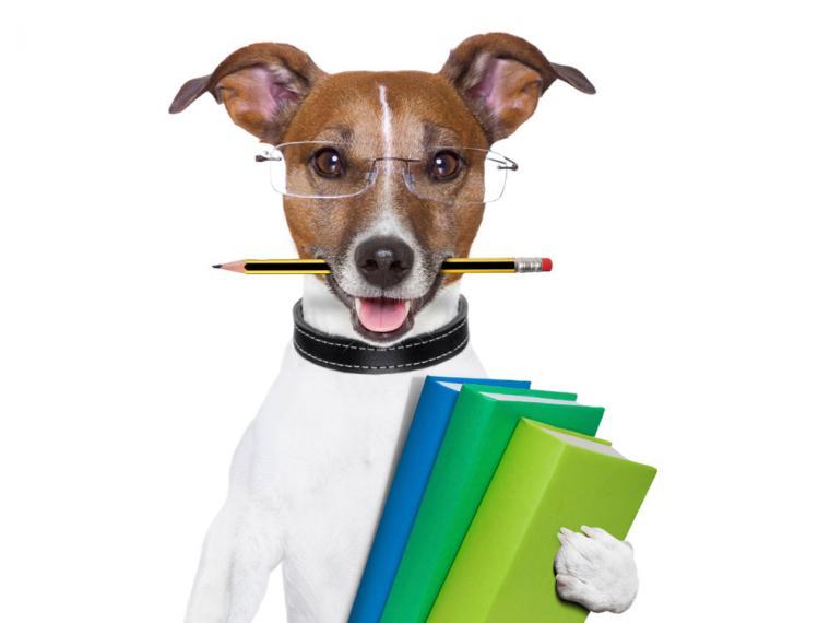 Resultado de imagen para perros inteligentes