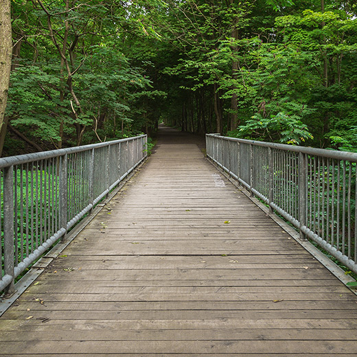 Wooden bridge on a hiking trail during the summer