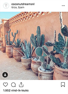 CLAIREWOUTERS.COM Coconut Dreams Instagram post Ibiza