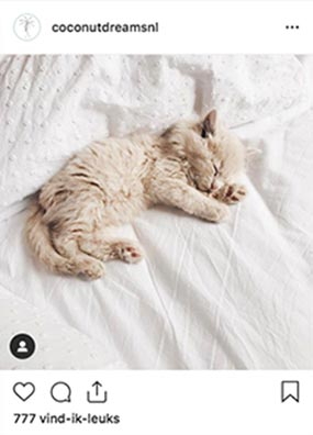 CLAIREWOUTERS.COM Coconut Dreams Instagram post baby cat