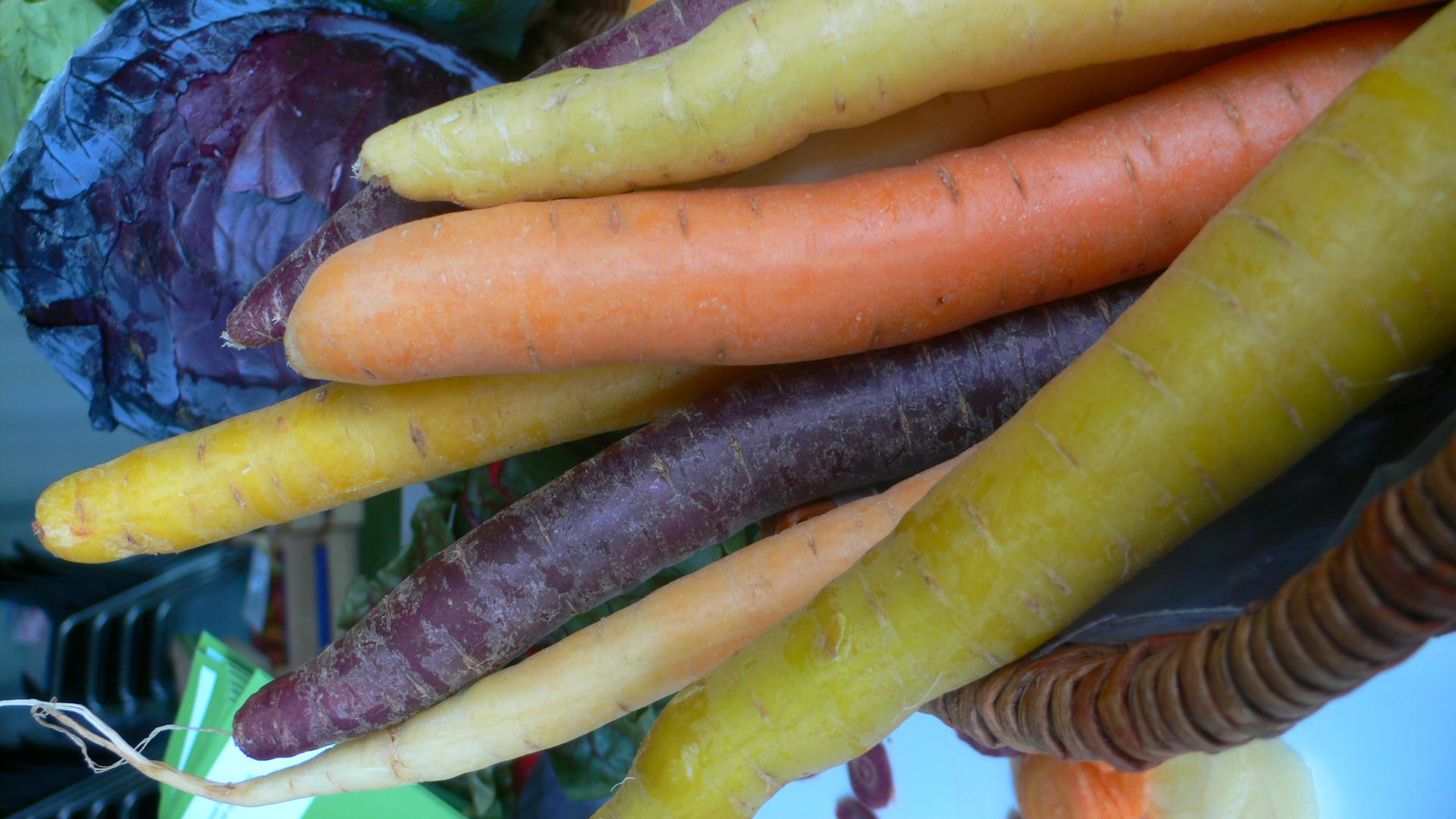 Bunte Karotten im September