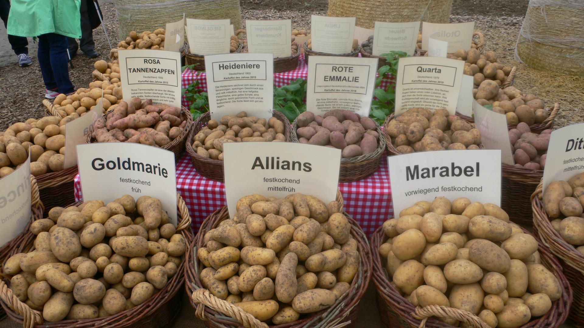 leckere Kartoffelsorten auf der BUGA